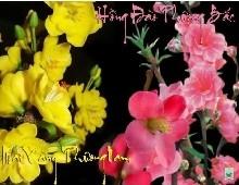 Những mùa Xuân lang thang nhớ thuở vàng son sân khấu !